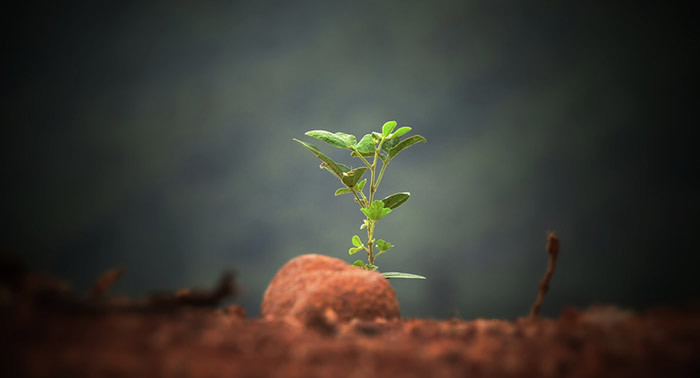 A seedling emerges from a heap of earth.